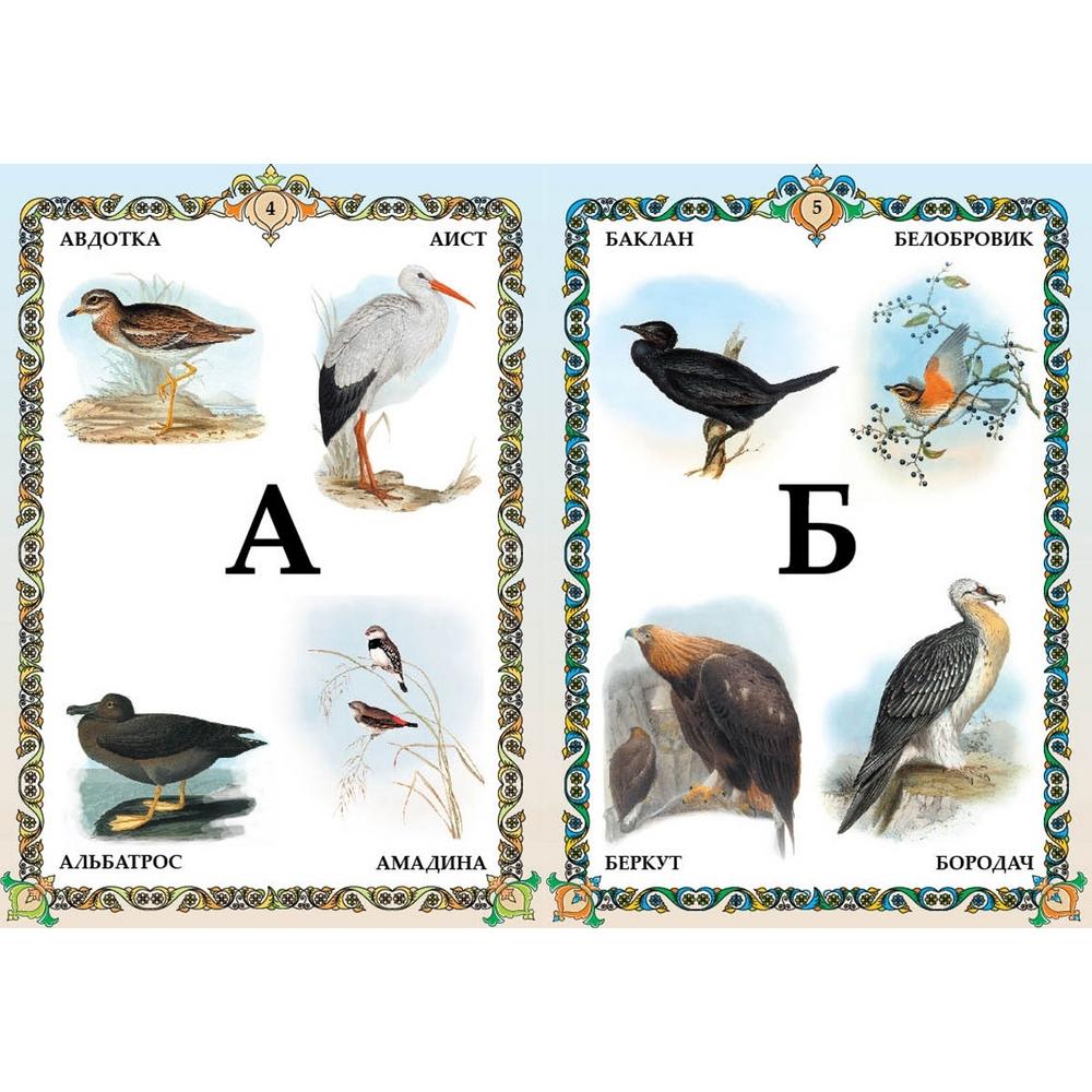Название птиц по алфавиту