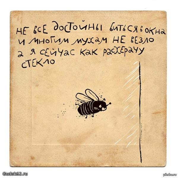 Стихи про мух