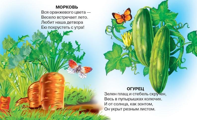 Стихи про огород