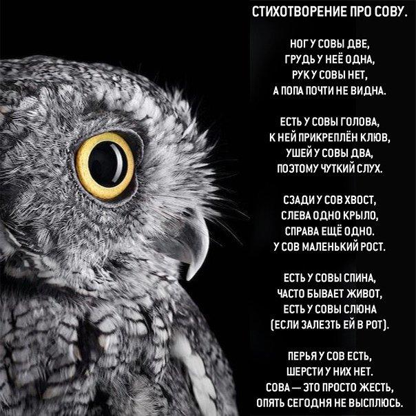 Стихи про сову для детей