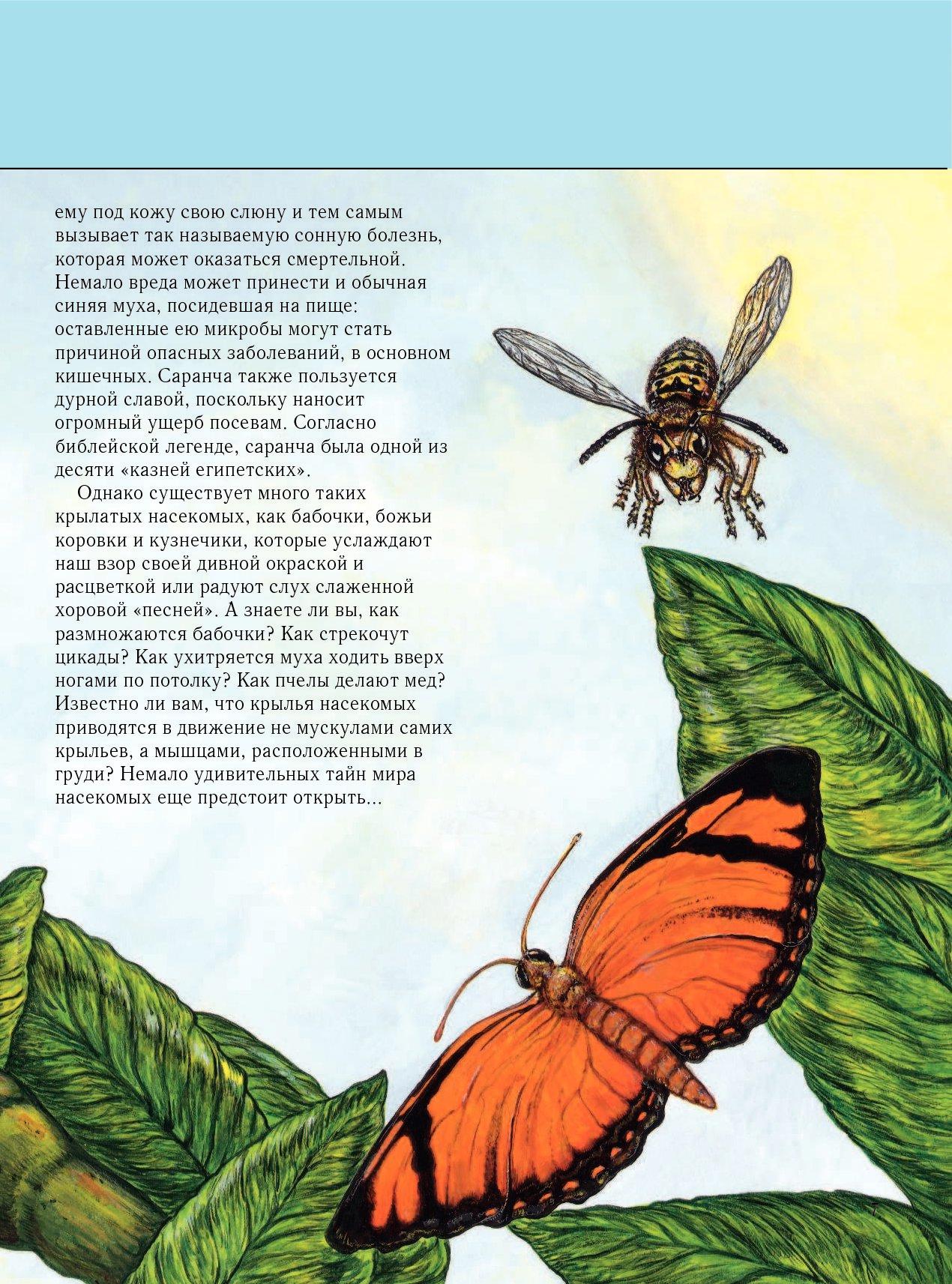 Стихи про насекомых для детей