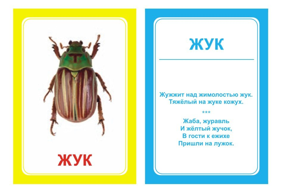 Стихи про жуков для детей