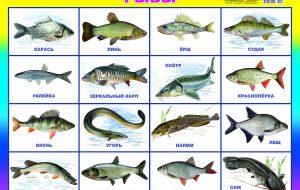 Рыбы по алфавиту от А до Я