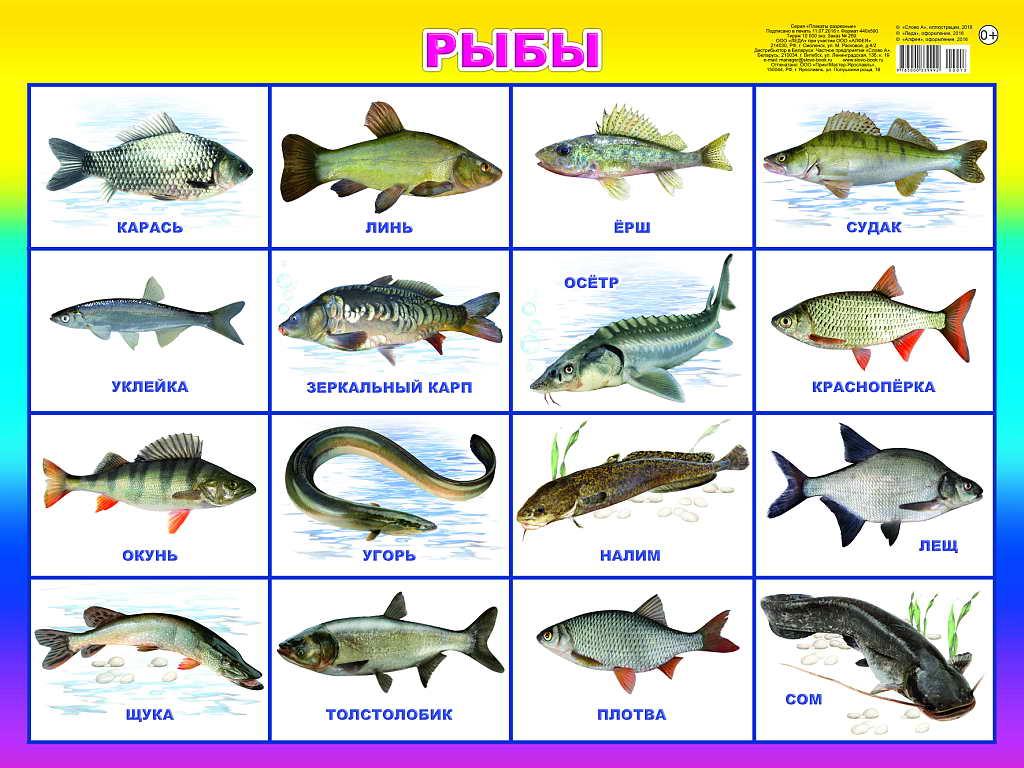 Название рыб по алфавиту