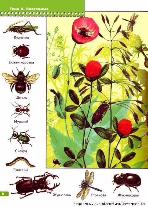 Вера Аношина. Загадки о насекомых для детей