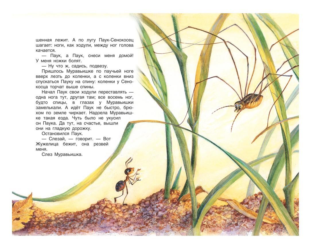 Стихи про паука
