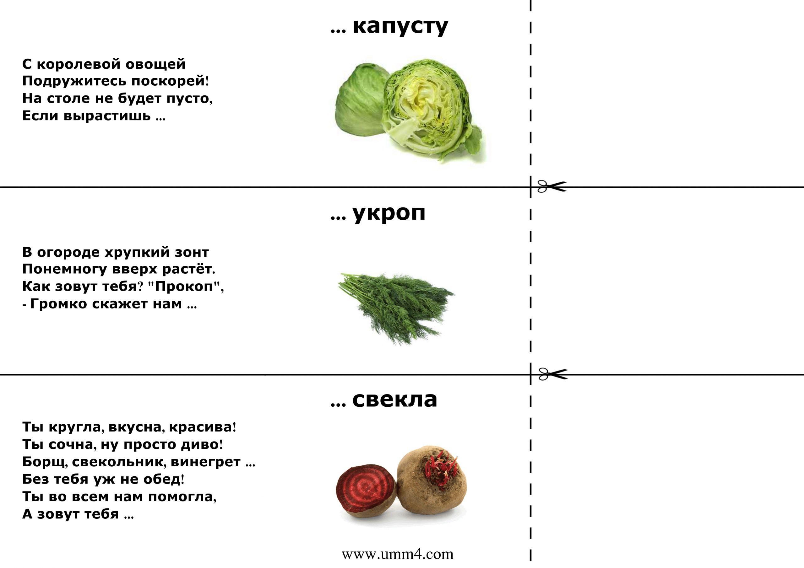 Загадки про растения для детей с ответами