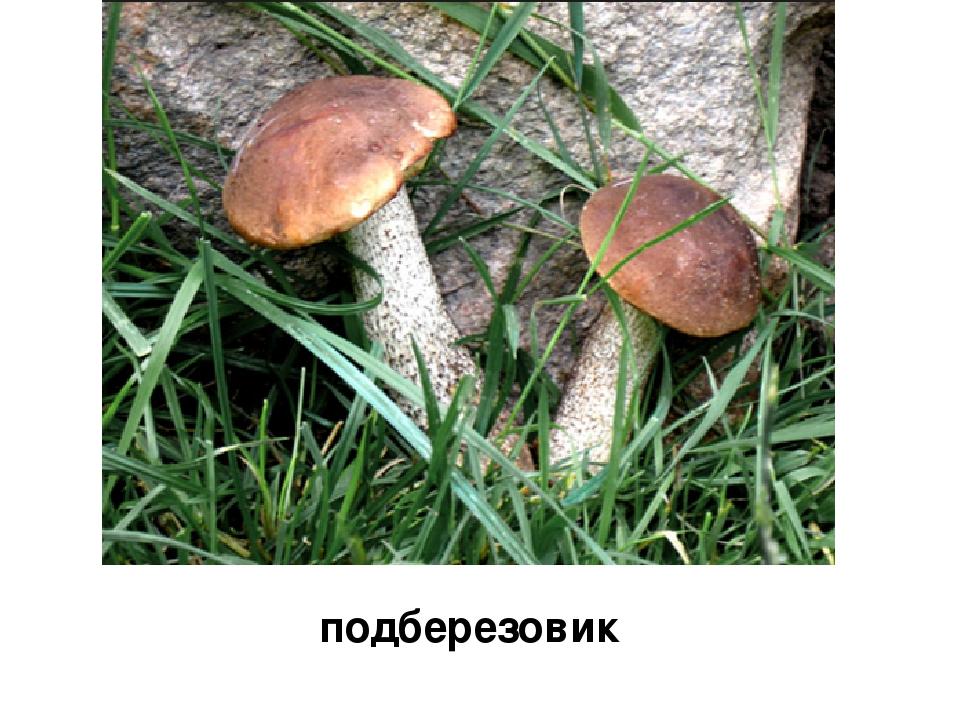 Стихи-загадки про грибы