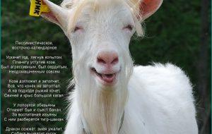 Стихи про козу