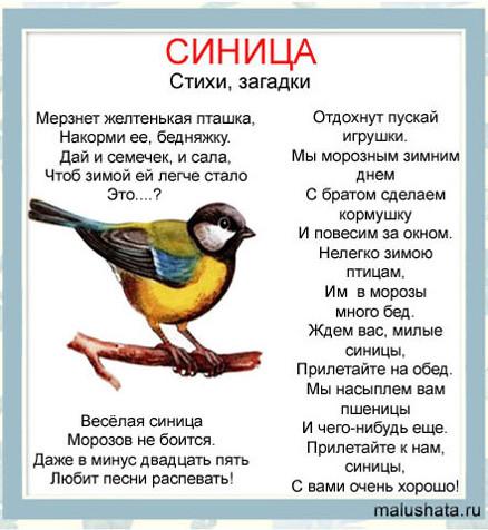 Стихи про птиц. Энциклопедия в стихах