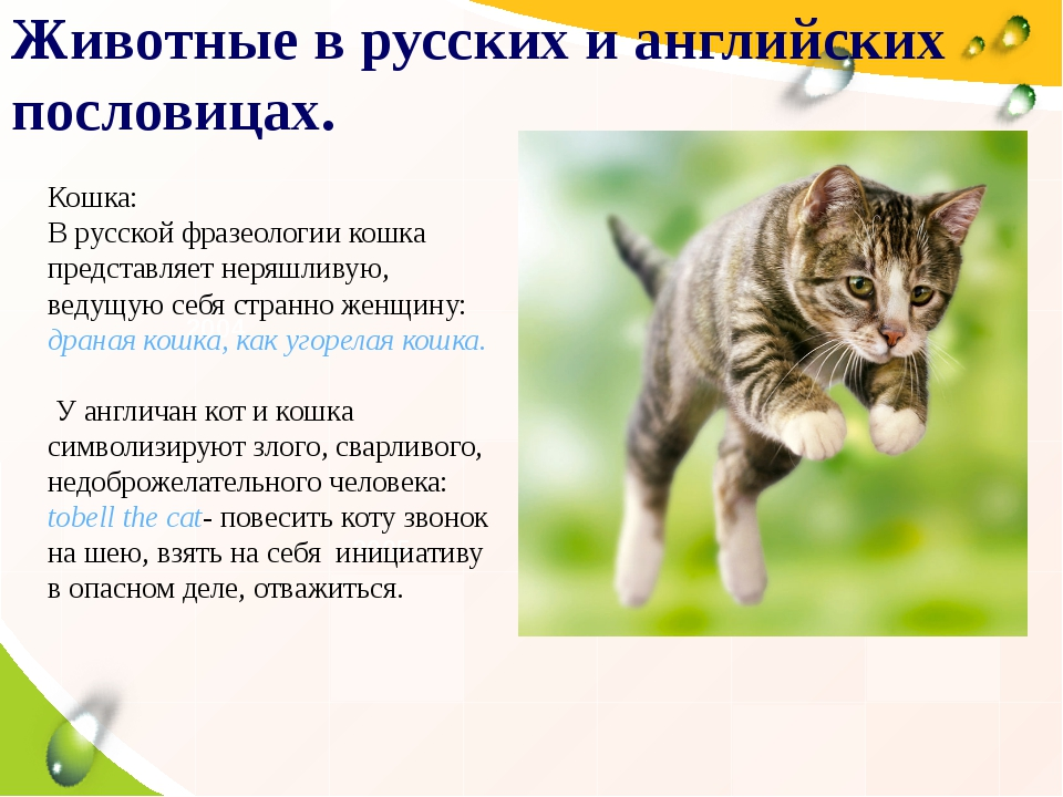 Пословицы и поговорки про животных